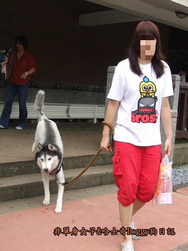 哈士奇Doggy2012陽明山二子坪13