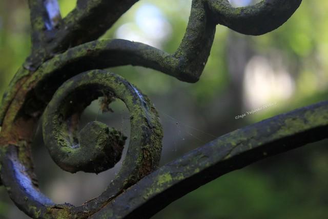 Inga Vuljanko Desnica - Memories Of The Moss-Covered Past