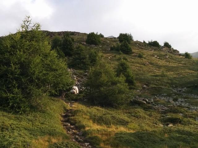 Aufstieg Vermoispitze über den Grasrücken