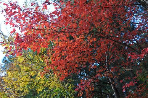 fall photograpy