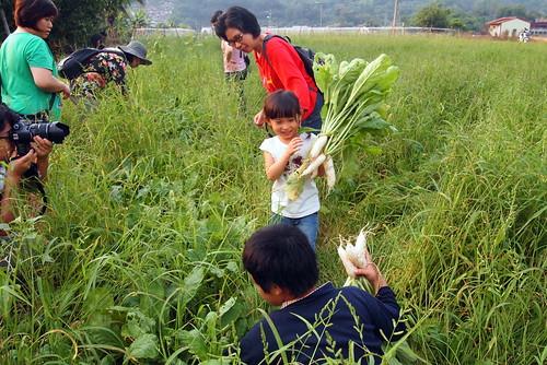 美濃白玉蘿蔔季,大人小孩都能體驗「拔蘿蔔」的快樂。