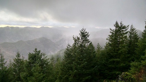 high elevation huckleberry