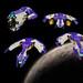 Aquilax fleet by Rogue Bantha
