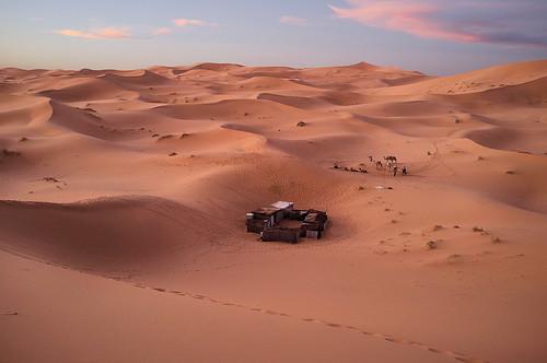 africa camp sahara sunrise algeria sand desert dune camel morocco sanddune