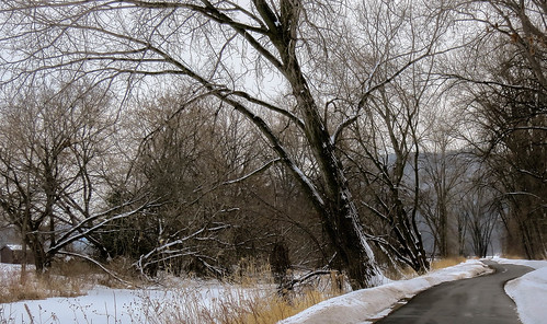 november trees snow nature minnesota landscape grey midwest winona snowcovered