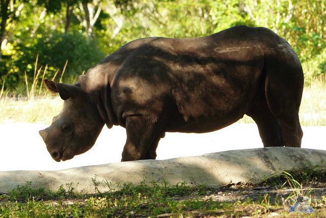 Zoo Miami 14.11.2014 142