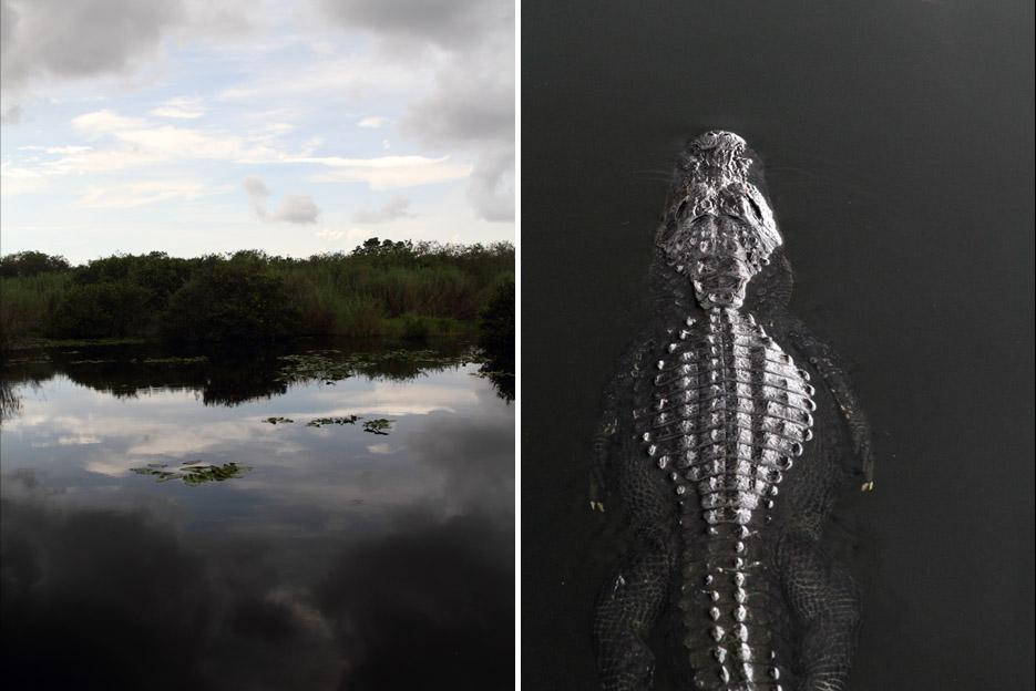 090714_Everglades11