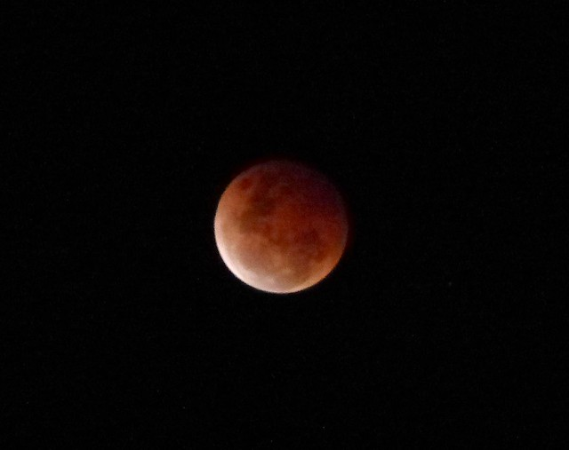 red moon qld - photo #42