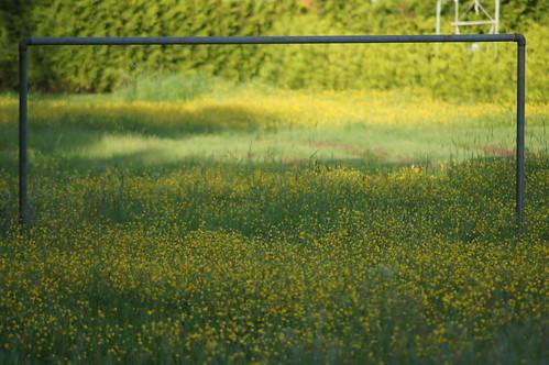flowers summer goal sweden skara