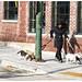 Walking The Dogs by swanksalot
