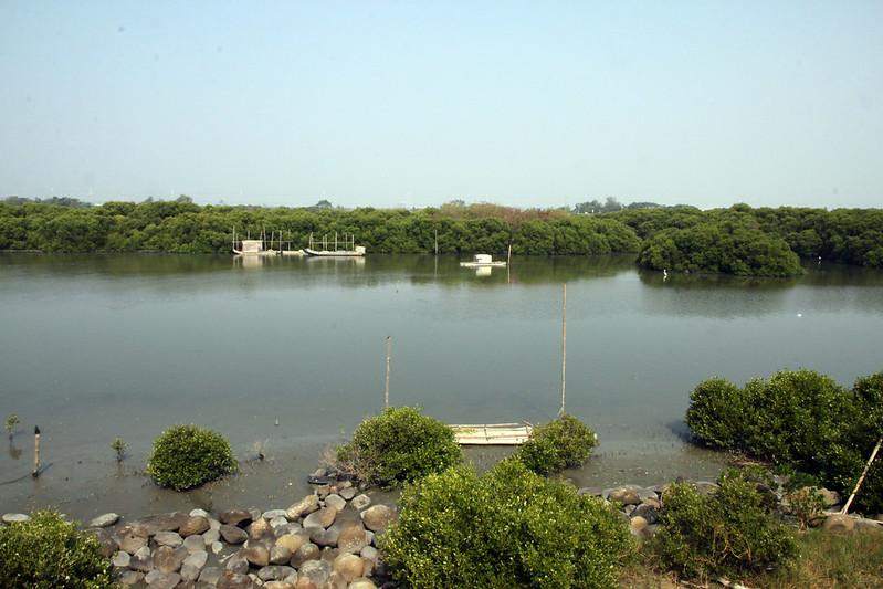 day 2四草濕地 (4)