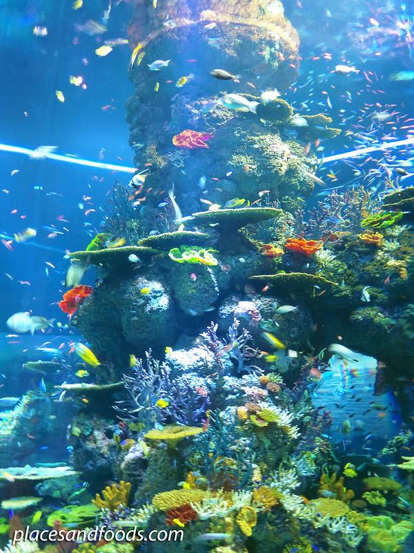 sea aquarium tube