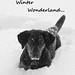 Winter Wonderland by cheesy42