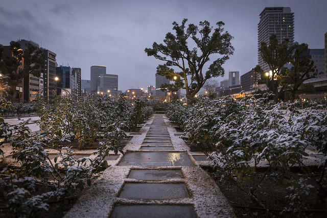 Nakanoshima Rose Garden in Snow