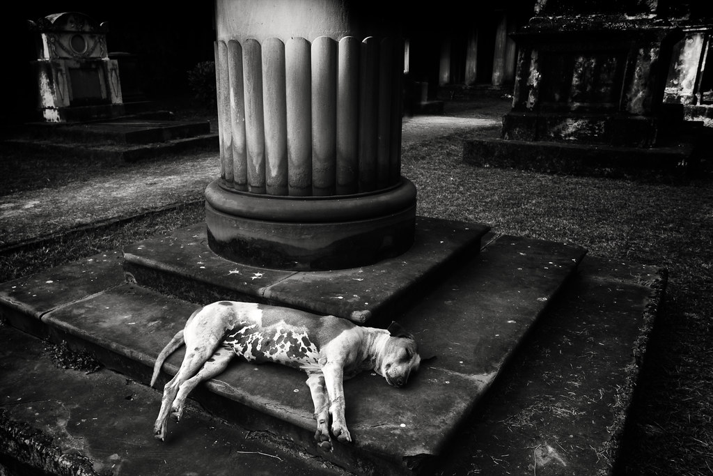 @ South Park Street Cemetery, Kolkata