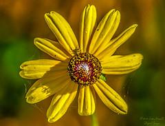 Macro & Flowers
