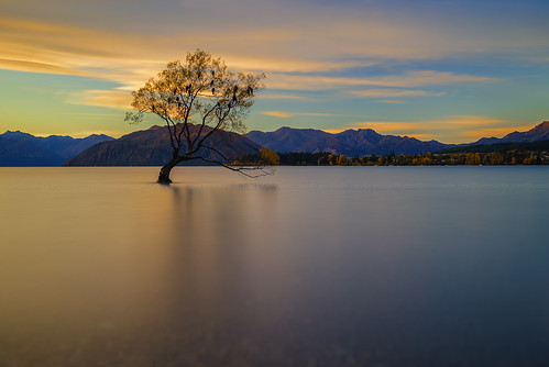 longexposure sunset newzealand cloud lake tree landscape outdoor calm lakeside willow nz otago serene submerged lakeview aotearoa wanaka lakewanaka sunsetsunrise wanakatree thatwanakatree