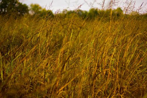 field grass texas bayou mckinney