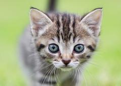 Cat Chums