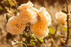 Bouquet On A Stem, ii