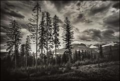 Poland - Tatra Mountains - Landscape with trees_sepia_DSC1403