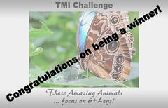 6+ Legs -TMI Winners award