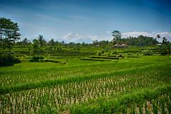 Bali Sawa Ubud