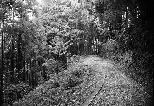 blackandwhite bw film monochrome analog forest kodak olympus olympusom2 zuiko 黑白 om2 森林 kodak400tx 底片 特富野古道 kodakfilms hzuikoautow24mmf28