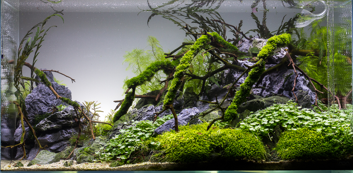 Aquascape No. 7 - ADA 90P - Seaside - Update 11/8 - The ...