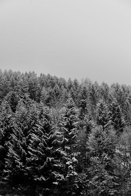 Styrian Snow
