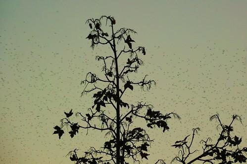 Il cielo con l'emigrazione degli uccelli