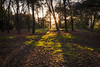 Autumn Fantasy : The Magic of Autumn Light