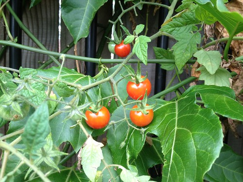 I'm a closet greenie - and love growing my own vegetables