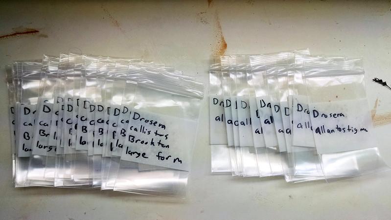 Drosera callistos and Drosera allantostigma gemmae in packets.