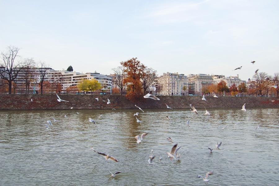 Autumn in Paris (9)