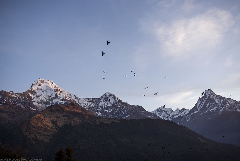 birds flying over Annapurna mountains