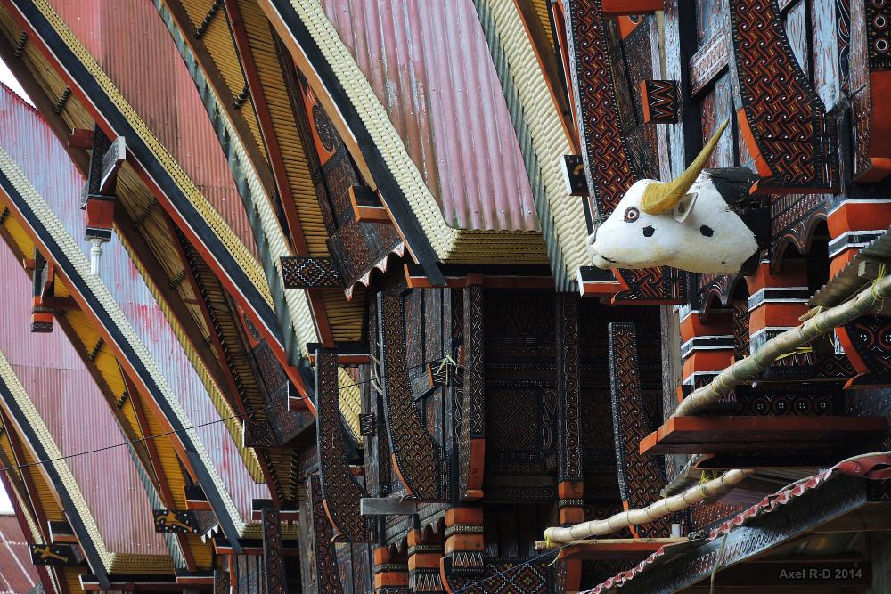 Traditional houses - Toraja