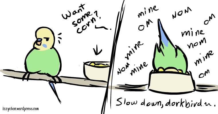 budgie treat corn om nom nom