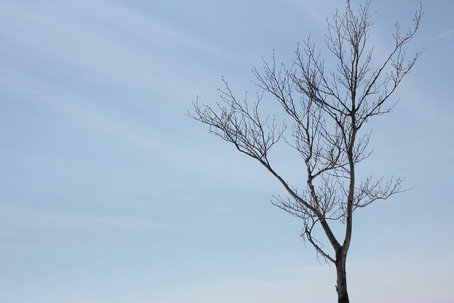 2014-04-13_00763_守門岳.jpg