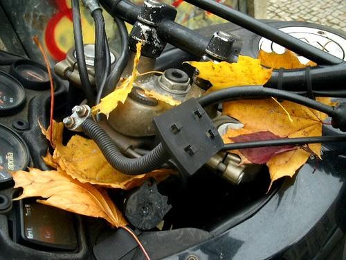 Motorrad und Herbstlaub