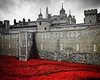 Poppies at the Tower by Rach_123