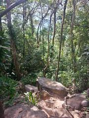 jungla bajando rocas