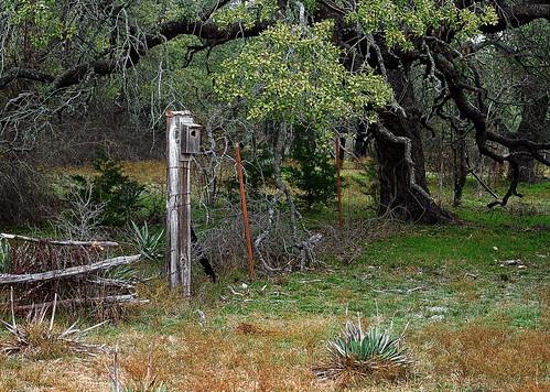 usa nature birds farmhouse texas decay farm wildlife rustic oldbarns smalltown sonycamera birdhouses centraltexas texastowns sonya58 backroadimages
