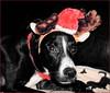 Lola's Christmas Adventure