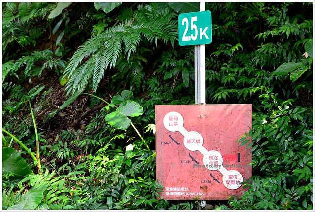 聖母山莊聖母登山步道宜蘭礁溪005-DSC_6605