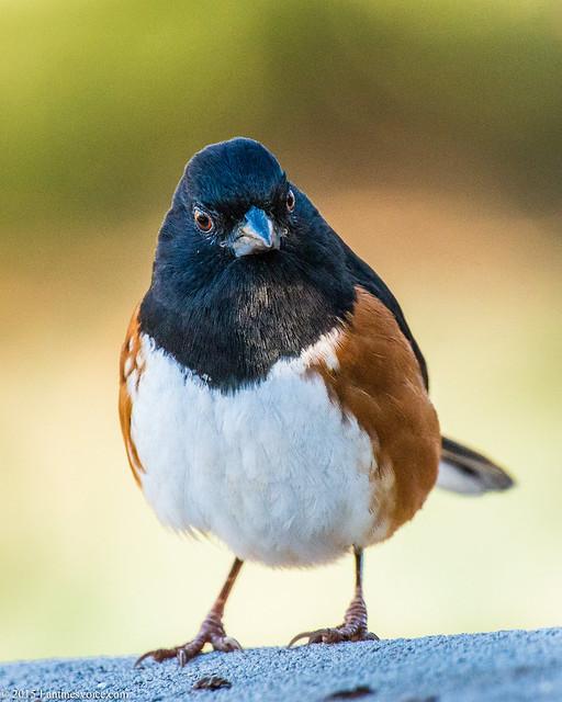 Bird_Feeder_01.01.15-3