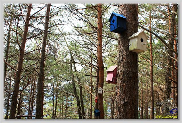 10 Ruta de los Duendes y Bosque encantado