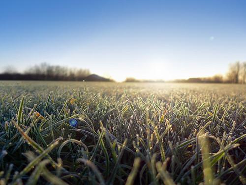 winter light luz grass wales frost bokeh cardiff gales invierno cesped lx7 pontprennau lumixlx7 panasoniclumixlx7