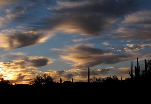 sunset arizona cactus sky southwest nature colors beauty skyline clouds skyscape outdoors visions evening solitude peace desert sundown silhouettes az adventure explore saguaro exploration discovery sonorandesert skyshow saguarocactus maricopacounty notwoalike zoniedude1 hieroglyphicmountains earthnaturelife canonpowershotg12