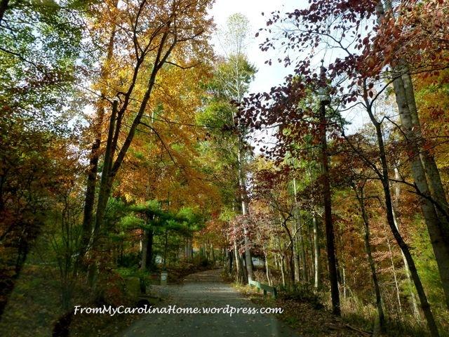 Fall Driveway 2014 3